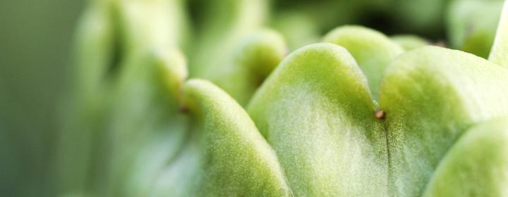 grøntsag tæt på