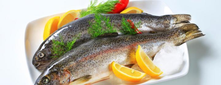 fisk_0