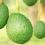Glæden gror med økologiske avokadoperler på snor