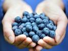 Antioxidant-kontroversen